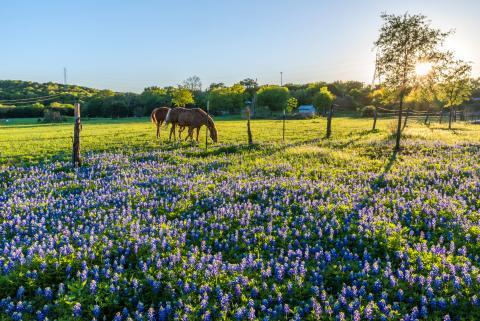 Horses in spring